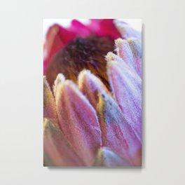 Protea Flower Metal Print
