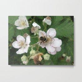 Blackberry bee Metal Print