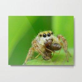 spider eatting a bug Metal Print