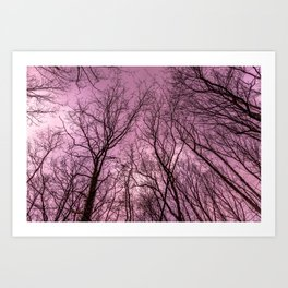 Naked trees, pink sky Art Print