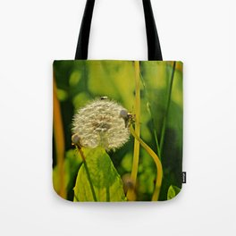 Last Dandelion in Sunlight Tote Bag