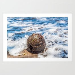 Coconut in the Sea Art Print