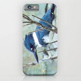 Young Belted Kingfisher (Repost) iPhone Case