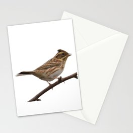 Rustic Bunting Bird Vector Isolated Stationery Cards