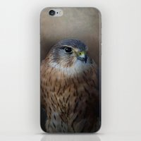 merlin iPhone & iPod Skins featuring The Merlin by Pauline Fowler ( Polly470 )