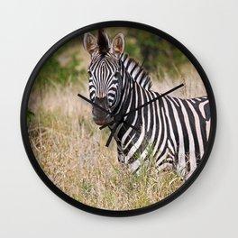 Zebra in the grass - Africa wildlife Wall Clock