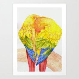 Sun conures Art Print