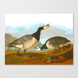 Barnacle Goose Canvas Print