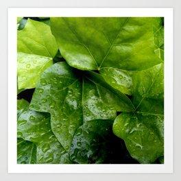 Nature and Greenery 24 raindrop Art Print