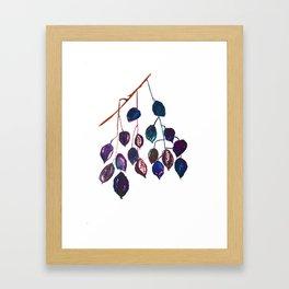 Kurrajong seeds, Minimalist, Scandi Framed Art Print