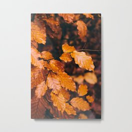 Autumn Details Metal Print