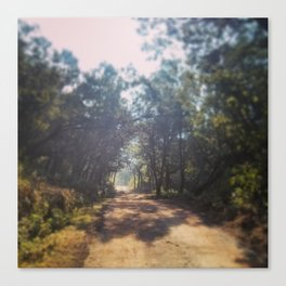 Forest Roads, Ooty Canvas Print