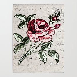 Shabby chic vintage rose and calligraphy Poster