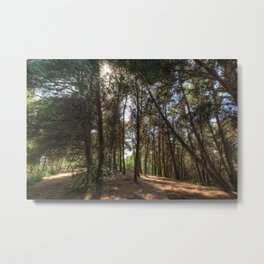 Crossroads In The Woods Metal Print