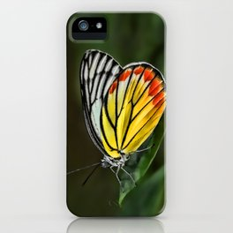 Butterfly Staring at Sunset iPhone Case