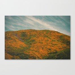 California Poppies 028 Canvas Print