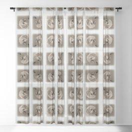 """""""Denali"""" - Lap Dog Sheer Curtain"""