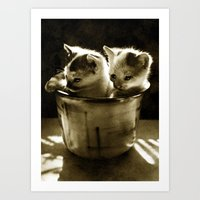 kittens Art Prints featuring Kittens by Northern Light Images