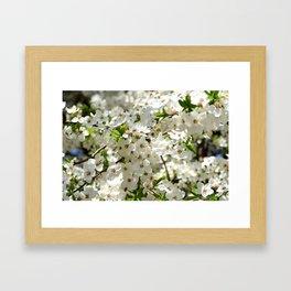 Blooming cherry Framed Art Print