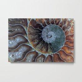 Spiral Ammonite Fossil Metal Print