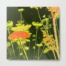 Pretty Wild Carrot Flower Blooming Metal Print