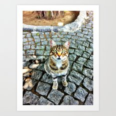 Alley Cat Art Print