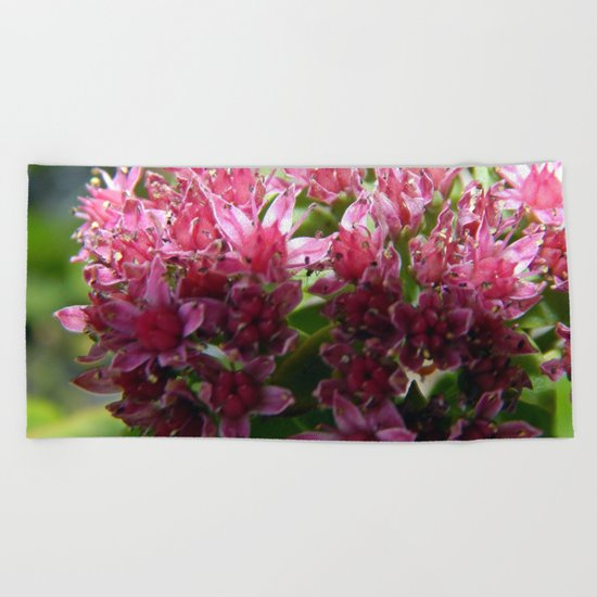 Sedum Flowers and the Ant Beach Towel