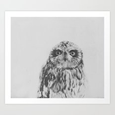 Owl In Black And White Art Print