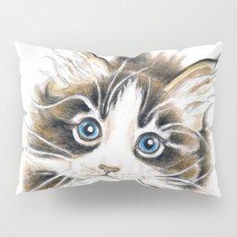 Cute Maine Coon Kitty Pillow Sham