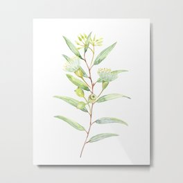 Waterpolo eucalyptus Metal Print