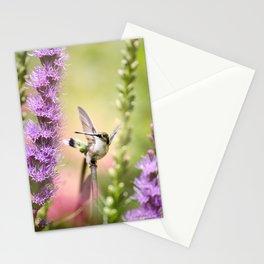Hummingbird Whimsy Stationery Cards