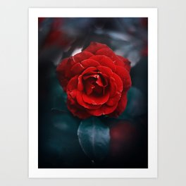 Red Rose - red as crimson Art Print