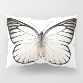 Prioneris philonome butterfly Pillow Sham