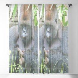 Pondering Pinecone Sheer Curtain