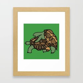 Turtle Galapagos mate love mating  Framed Art Print