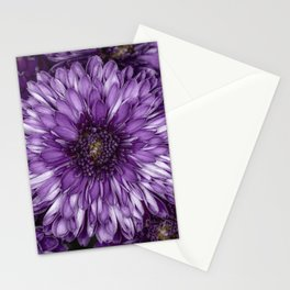 Purple Mums Stationery Cards