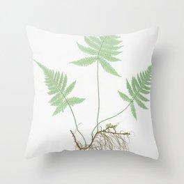 Botanical Beech Fern Throw Pillow