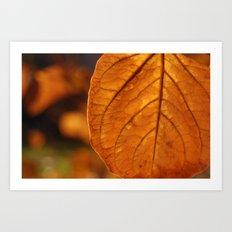 Sun-drenched leaf Art Print