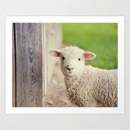 Little Lamb I Art Print