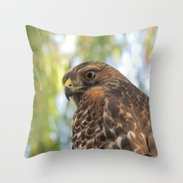 Young Red-Shouldered Hawk in a Desert Willow Throw Pillow