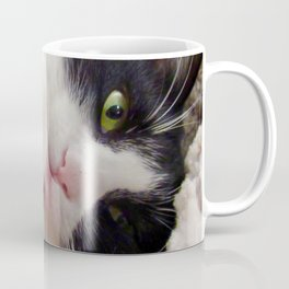 Orazio very sweet cat Coffee Mug
