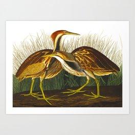 American Bittern Vintage Bird Art Art Print