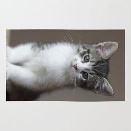 Jack - Kitten Portrait #2 (2016) Rug