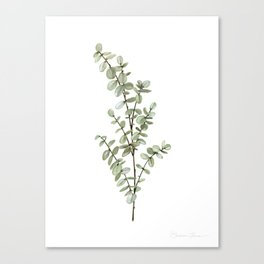 Baby Blue Eucalyptus Watercolor Painting Canvas Print