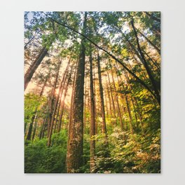 Pine Trees Near Willamette Valley Canvas Print