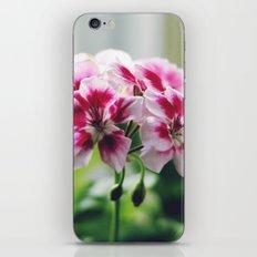 Geranium 2 iPhone & iPod Skin