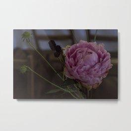 Film Grain Pink Metal Print