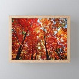 Sun in the Trees Framed Mini Art Print