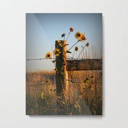Waking Up Sunflowers Metal Print