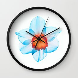 narcissus poeticus (feeling turquoise) Wall Clock